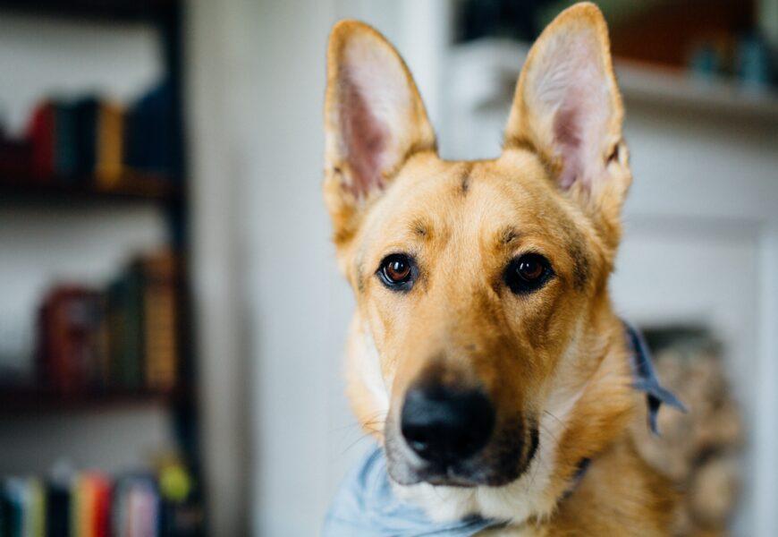 Hundefoder – Hvilken slags skal jeg vælge?